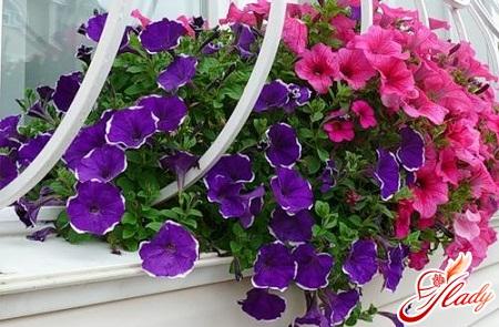 ampel plants for the garden