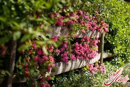 indoor azalea flower