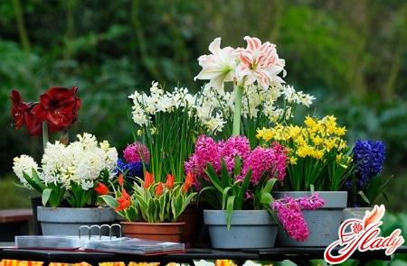 diseases of indoor plants