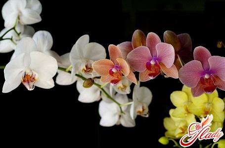 хвороби орхідей і їх лікування