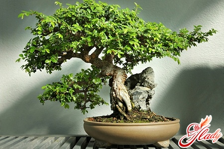 how to grow a bonsai at home