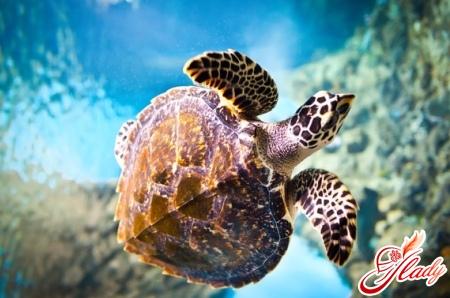 turtle aquatic care