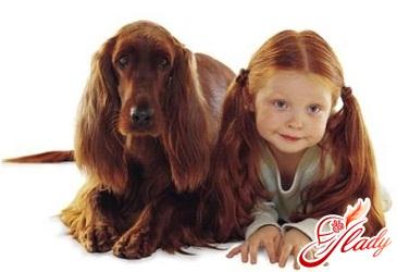 child bitten by a dog