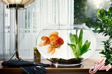 how to clean an aquarium properly