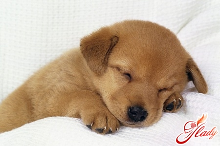 cystitis in dogs treatment