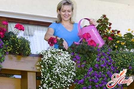 what flowers can be planted on the balcony