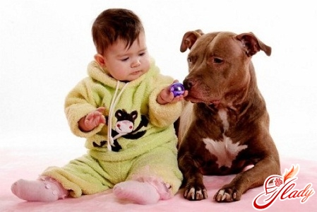 the child is afraid of dogs
