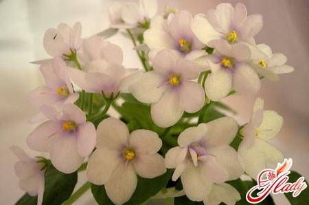 violet room care