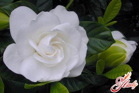 gardenia home care