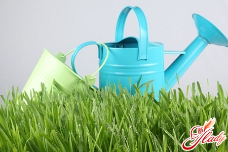 Lawn care in spring