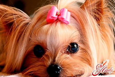 glamorous dogs