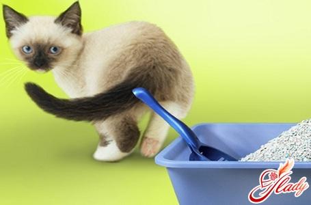 як позбутися від запаху котячої сечі самостійно