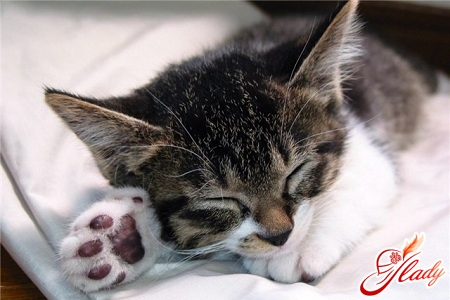 than to treat lichen in cats