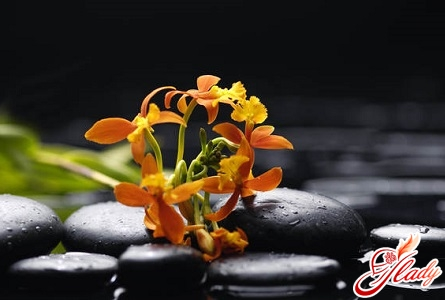 how to save an orchid for a long time