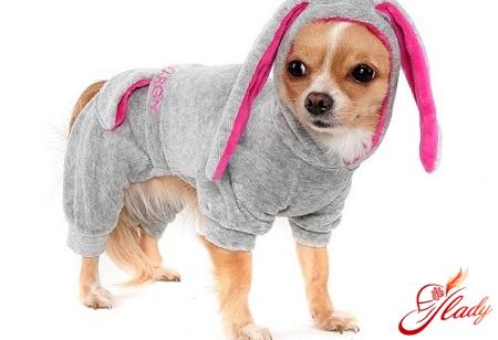 як зшити собаці одяг