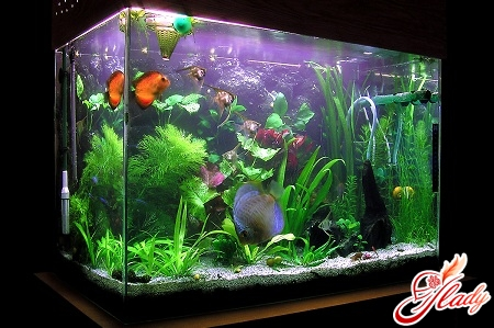 how to care for fish in an aquarium