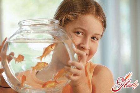 care for fish in the aquarium