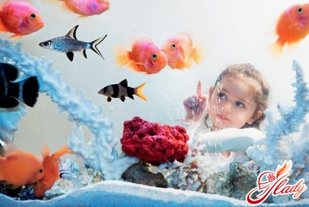 How to take care of fish in the aquarium
