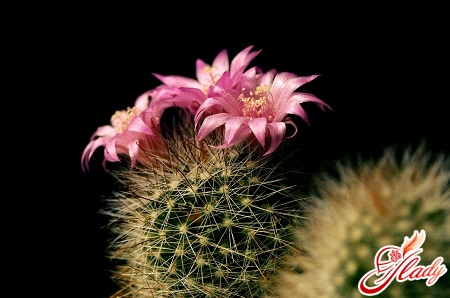 care of cacti