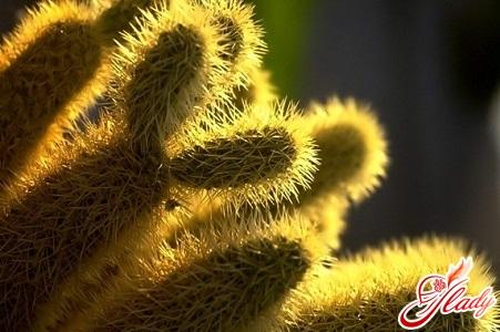 cacti care