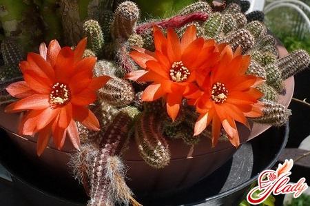 cactus home care