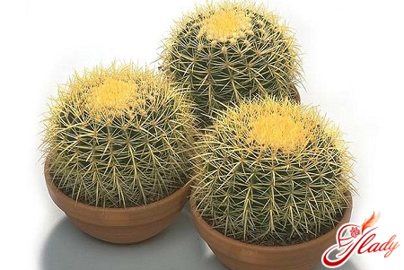 care for cacti in the home