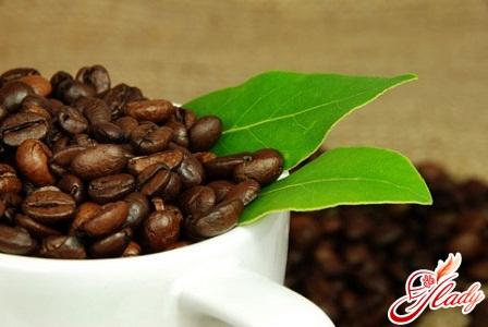 how to grow a coffee tree