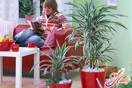 отруйні домашні рослини