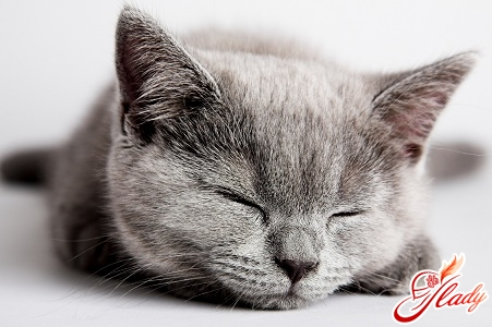 cats pregnancy and childbirth