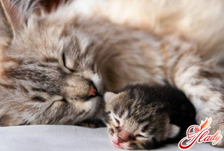 Pregnancy and birth in cats