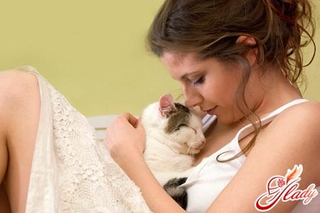 як лікують кішки