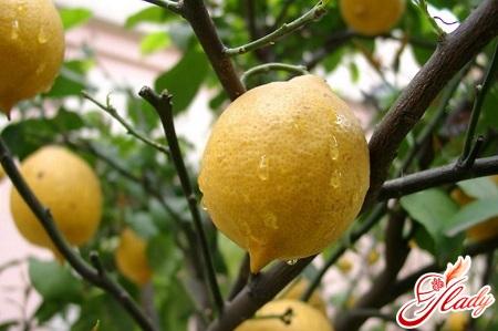 care for room lemon