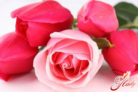 roses are the best varieties