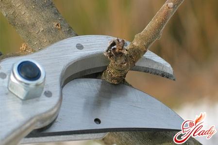 gardening pruning fruit trees