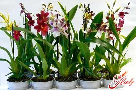 Cumbria Orchid Care