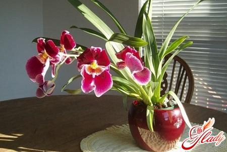 mintony orchid