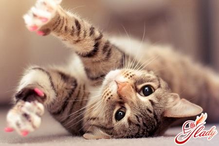 лупа у кішки