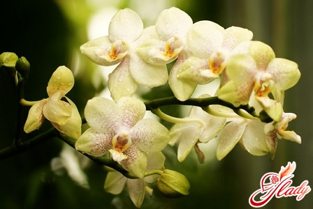 orchid dumped flowers