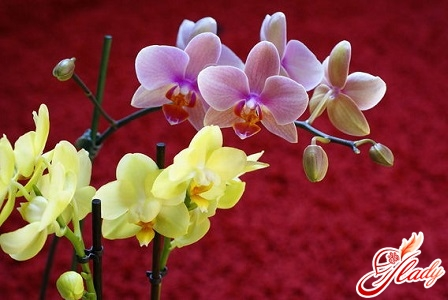 why the orchids fall flowers