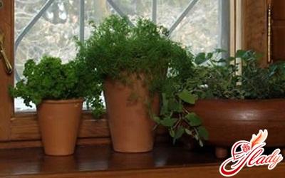 garden and garden on the windowsill