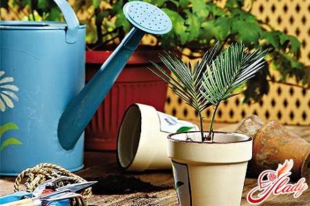 watering of indoor plants