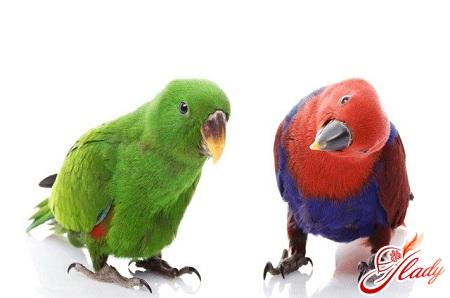 породи папуг