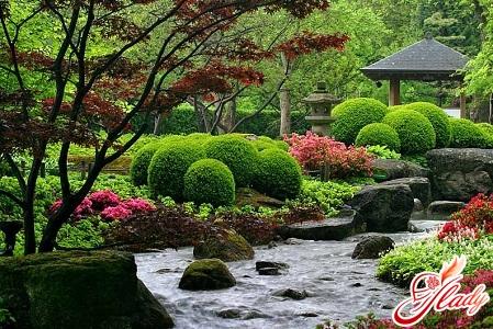 garden and garden with their own hands