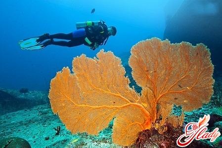 Thailand Similan Islands