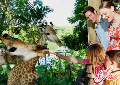 singapore zoo attractions