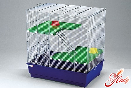 hamsters Syrian care