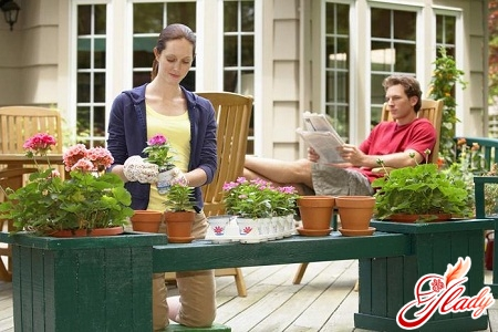 кімнатні рослини і догляд за ними