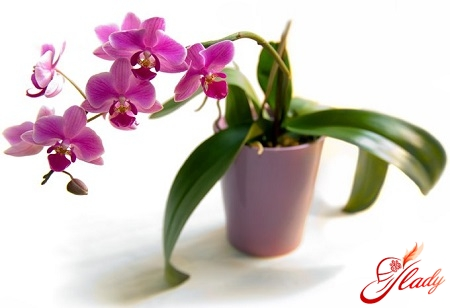 care for orchids in winter
