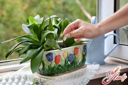 pests of indoor plants in soil