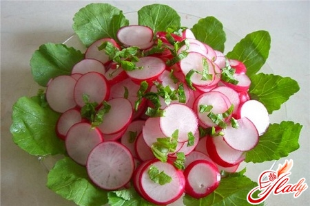 cultivation of early radishes